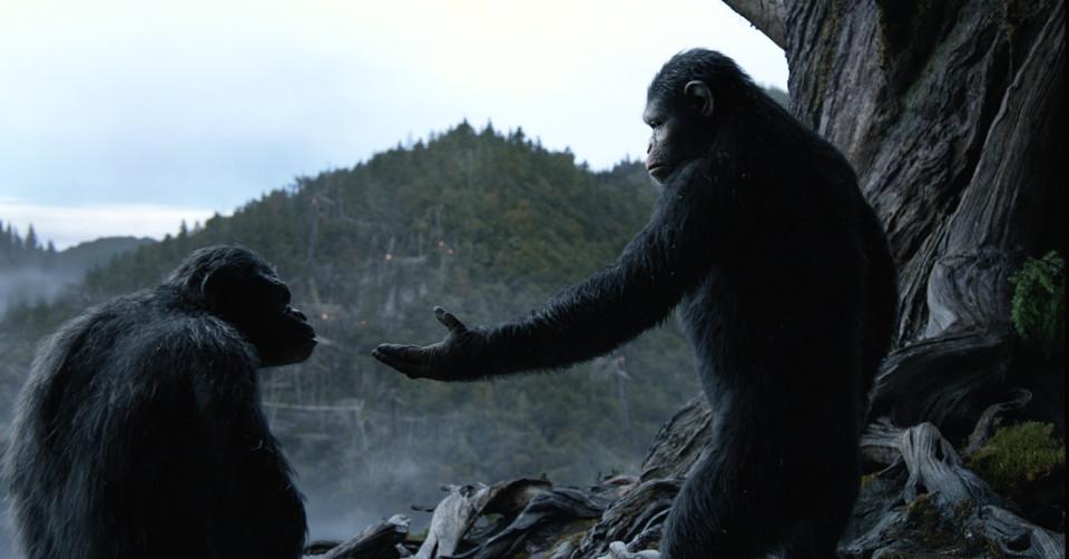 Apes 6